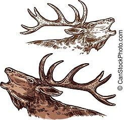 elk, elger, mule, anføreren, isoleret, vektor, skitse