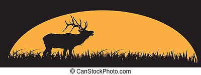 Elk. - Elk in silhouette.