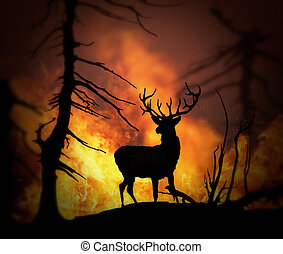 Elk escaping a wild land fire - Large elk escaping a wild ...