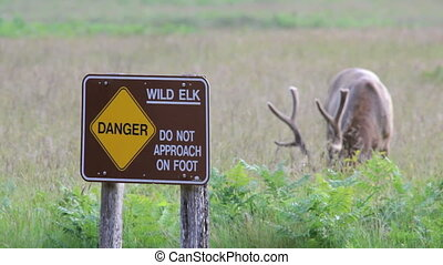 Elk Grazing and Warning Sign
