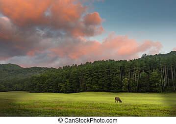 Elk Grazing at Sunrise