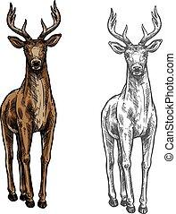 Elk hind vector sketch wild animal isolated icon - Elk wild...