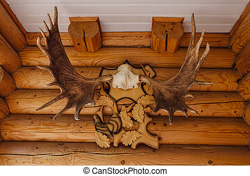 Elk horns on wooden wall