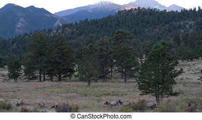 Elk Migration Rocky Mountain National Park Tripod Steady
