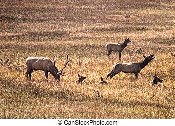 Elk Stretch
