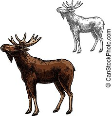 Elk vector sketch wild animal isolated icon