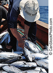 elkap,  fish, tonhal, lökhárító