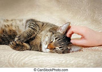ella, encantador, lindo, hembra, gato, sofá, manos, acariciando, acostado