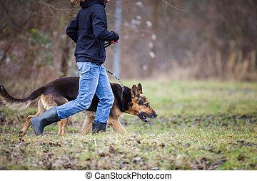 elle, chien, (german, obéissant, maître, shepherd)