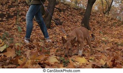 elle, chouchou, jeune, promenade, prendre, femme, forêt