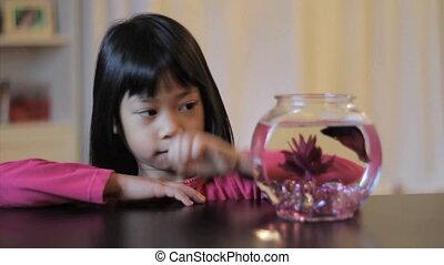 elle, fish, betta, fille asiatique, nourrit, rouges
