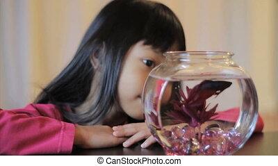 elle, fish, betta, girl, apprécier, rouges