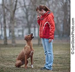 elle, (rhodesian, chien, ridgeback), maître, obéissant