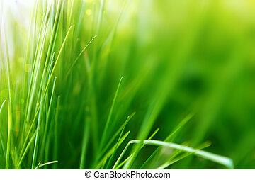eller, baggrund, sommer, græs, grønne, forår