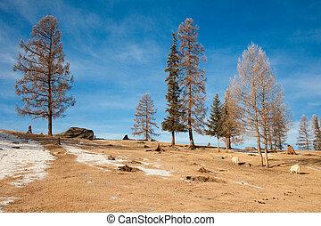 ellow, arbres
