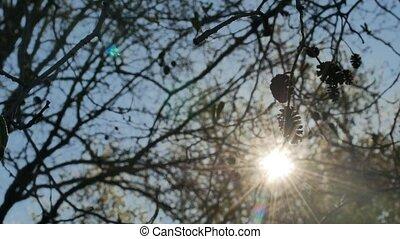 elm bud sun tree silhouette sun glare forest landscape...