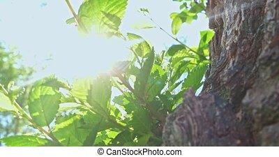 Elm tree twigs in 4K - Elm tree twigs tilt shot in 4K
