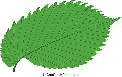 elm, elm leaf,