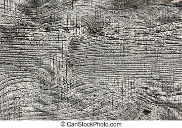 elm wood board texture 1
