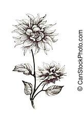 elszigetelt, kéz, háttér., húzott, monochrom, white virág