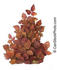 elszigetelt, kreatív, ősz, fehér, leaves., zenemű, piros