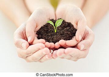 elternteil, pflanzenkeim, hände, haltend kind, schließen