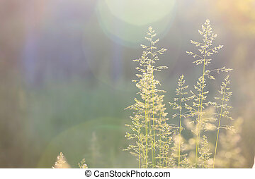 elvont, fű, háttér