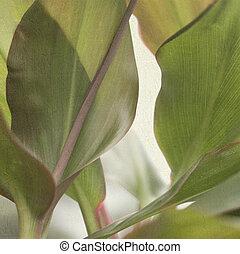 elvont, levél növényen, textured