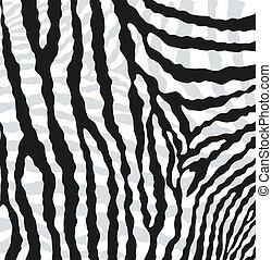 elvont, vektor, zebra, struktúra, bőr