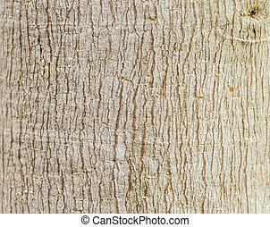 elzáródik, háttér, közül, fa alkat