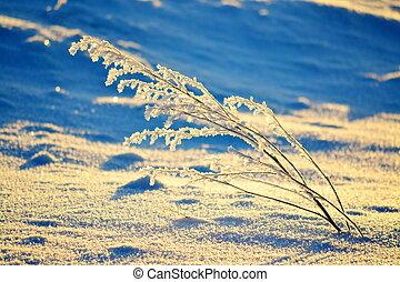 em, a, cedo, inverno, manhã