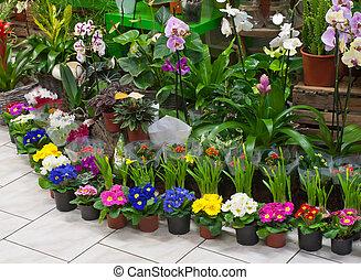 em, a, floricultor, loja