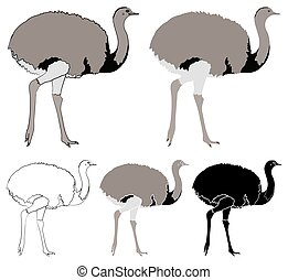 Ema bird in profile view - Vector art.
