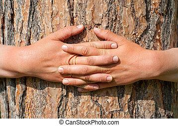 emballé, arbre, bras