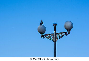 sitting on a lamp post pigeons