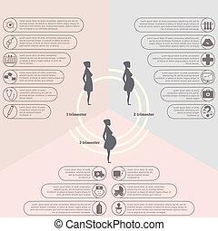 embarazo, infographics, etapas, nacimiento
