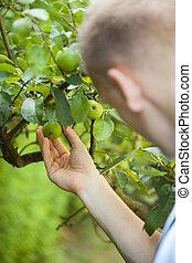 ember, dolgozó, alatt, gyümölcsöskert