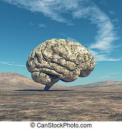 emberi, brain.