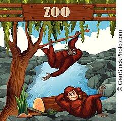 emberszabású majom