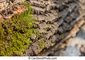 Embossed texture of brown tree bark with green moss. Embossed creative texture of old oak bark.