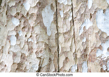 Embossed texture of the brown bark of