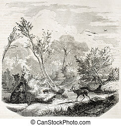 embuscade, chevreuil, chasse