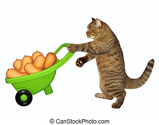 embutido, gato, carretilla