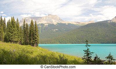Emerald Lake Firs