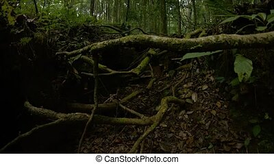 """Emerging from a Forest Ravine with Sound - """"Slow, upward..."""