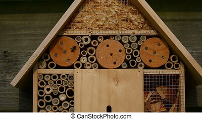 emerging from nest tubes in an insect hotel - solitair bee ...