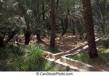 emirate, dhabi, al, árboles, fecha, oasis, palma, abu, ain
