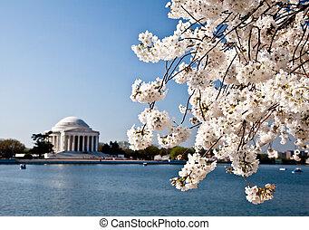 emlékmű, cseresznye, washington dc dc, jefferson, kivirul