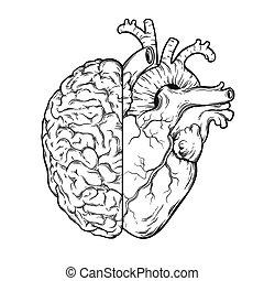emoção, coração, -, cérebro, human, lógica