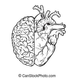 emoción, corazón, -, cerebro, humano, lógica